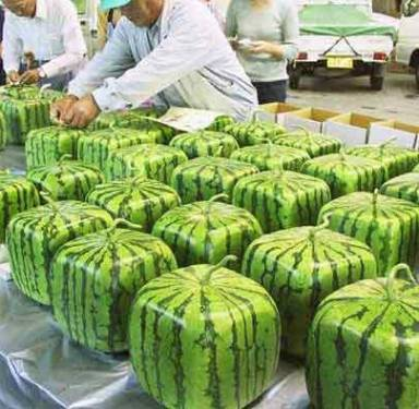 square-watermelon-2.jpg
