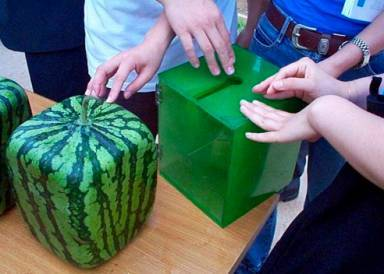 square-watermelon.jpg